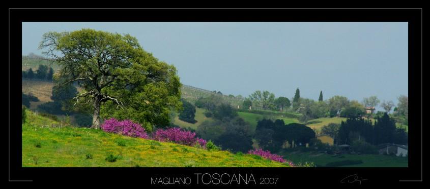 0012_toscana 2007